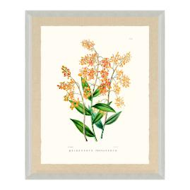 Bateman Orchid X Print from the New York