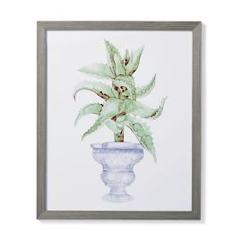 "35"" Cachepot Aloe Giclée Print II from the"