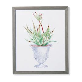 "35"" Cachepot Aloe Giclée Print I from the"