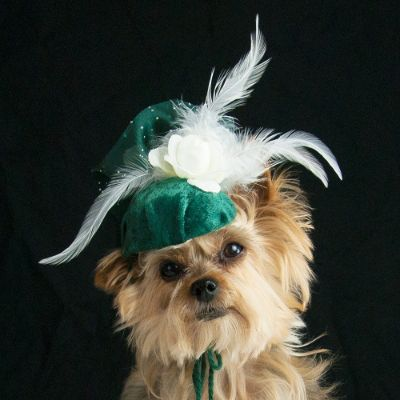 Green With Envy Dog Hat Frontgate