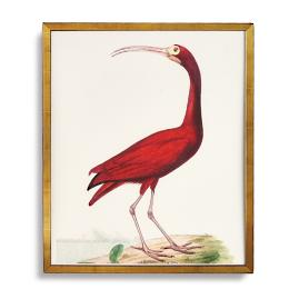 Scarlet Ibis Print from the New York Botanical