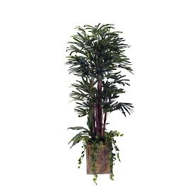 Lady Palm Tree in Square Wood Planter