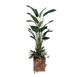 Bird of Paradise Tree in Square Wood Planter
