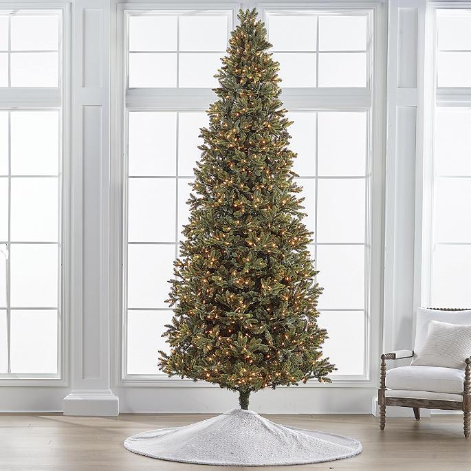 Noble Fir Christmas Tree.Noble Fir 10 Slim Profile Tree