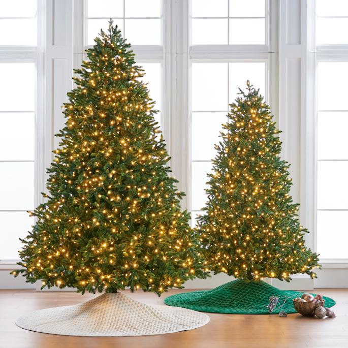 Noble Fir Christmas Tree.Noble Fir 7 1 2 Full Profile Tree