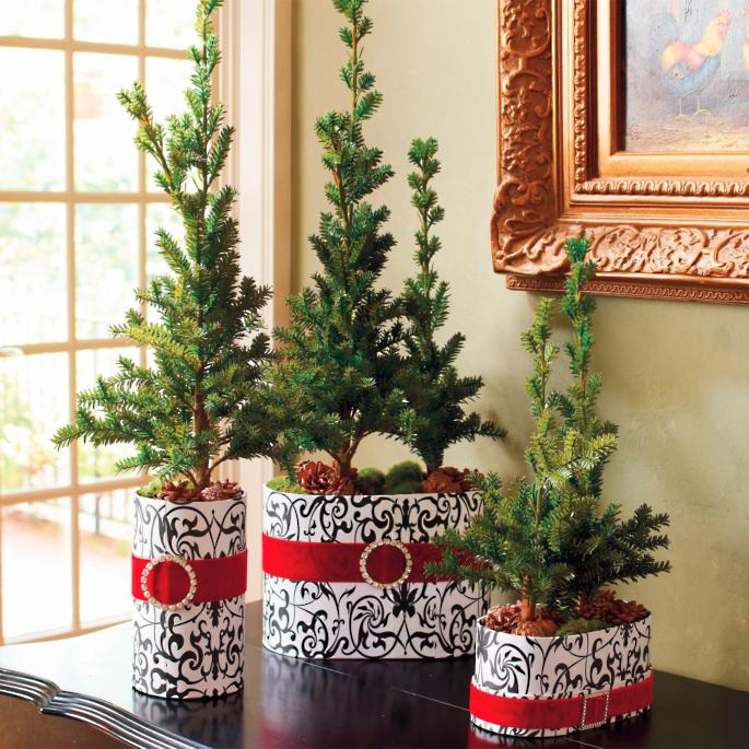 Set Of Three Miniature Potted Pine Trees Frontgate