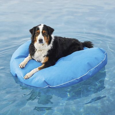 Dog Pool Float And Lounger Frontgate