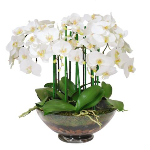 Phalaenopsis Orchid In Glass Vase Frontgate