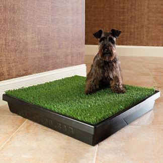 Indoor Dog Potty - Dog Training Equipment   Frontgate