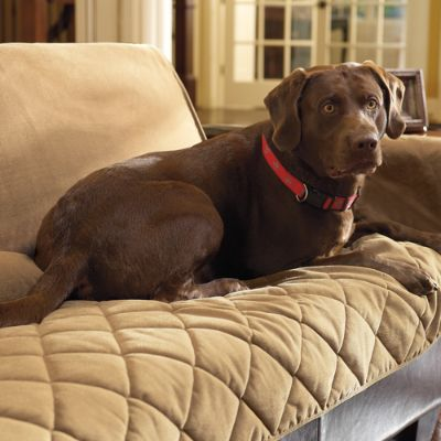 Cozy Pet Furniture Covers Frontgate